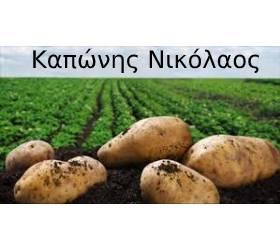 ΚΑΠΩΝΗΣ ΝΙΚΟΛΑΟΣ