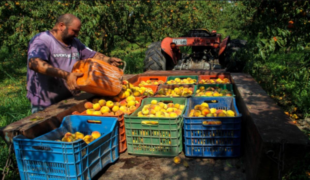 Καλή αρχή !! – Ημαθία: Στα χωράφια Έλληνες εργάτες μετά από 30 ολόκληρα χρόνια