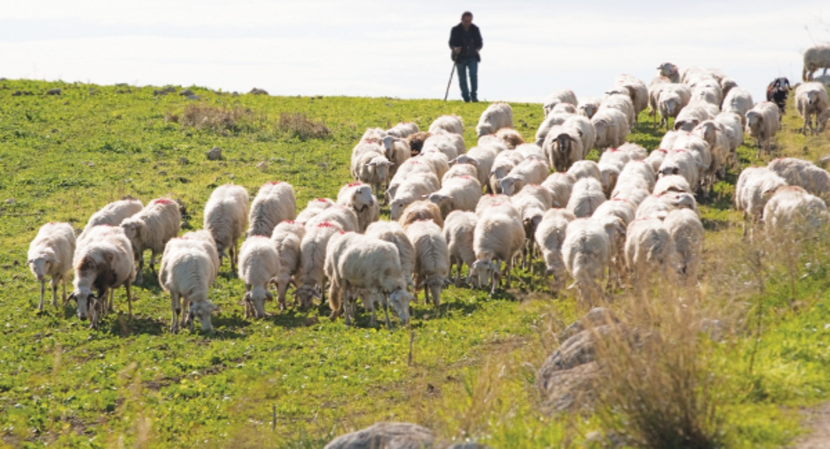 Με 30 εκατ. ενισχύεται η ελληνική αιγοπροβατοτροφία