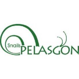 Snail Pelasgon